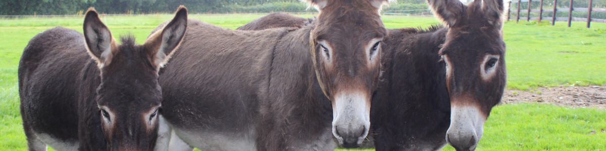 The Donkey Sanctuary cover