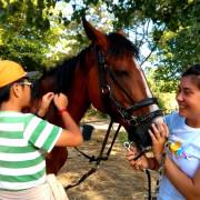 Volunteers grooming horse
